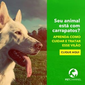 MUNDO MÍDIAS - PETCHANNEL EBOOK